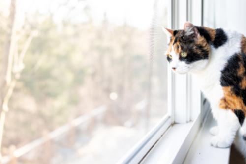 Ratgeber Fenstereinbau
